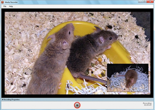 mice on video